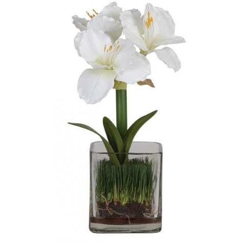 Amarylis W/Glass Vase